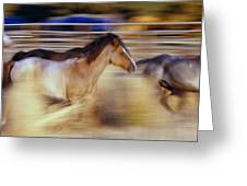 Blurred View Of Horses Running Through Greeting Card