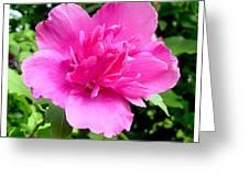 Blushingly Pink Greeting Card