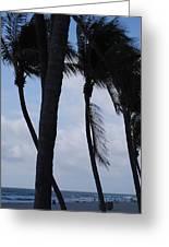 Blustery Beach At Dawn Greeting Card