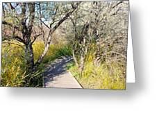 Boardwalk To The Birds Greeting Card