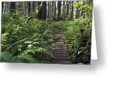 Boardwalk Winds Through The Forest Greeting Card