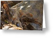 Bobcat Greeting Card by DiDi Higginbotham
