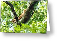 Bobcat In Tree Greeting Card