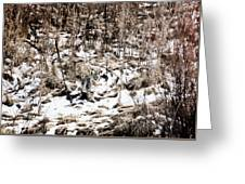 Bobcat Winter Greeting Card