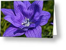Bodacious Balloon Flower Greeting Card