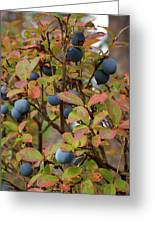 Bog Bilberry Greeting Card