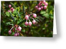 Bog-rosemary Greeting Card