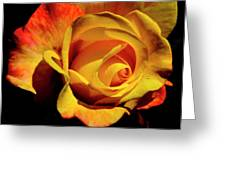 Bold Rose 2 Greeting Card