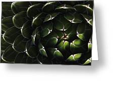 Bolivian Plant In Late Afternoon Light Greeting Card by Robert Postma