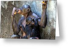 Bonobo 1 Greeting Card