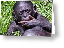 Bonobo 2 Greeting Card
