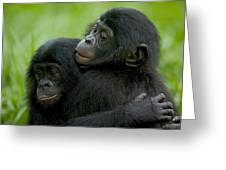 Bonobo Orphans Hugging Greeting Card