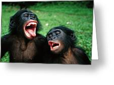 Bonobo Pan Paniscus Juvenile Pair Greeting Card