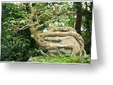 Bonsai Root And Stone Greeting Card