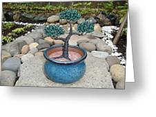 Bonsai Tree Small Round Planter Blue Greeting Card