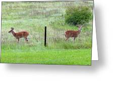 Bookend Twin Bucks Greeting Card