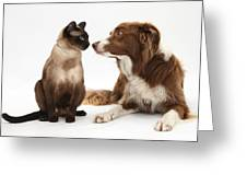Border Collie & Siamese Cat Greeting Card