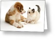 Border Collie And Birman-cross Kitten Greeting Card by Jane Burton