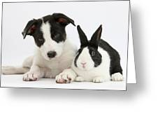Border Collie Pup And Dutch Rabbit Greeting Card