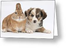 Border Collie Pup And Sandy Greeting Card