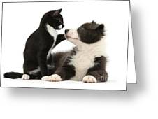 Border Collie Pup And Tuxedo Kitten Greeting Card