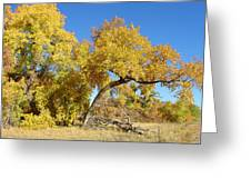 Bosque Beauty Greeting Card