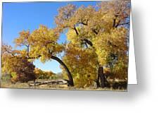 Bosque Fall Greeting Card