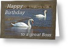 Boss Birthday Card - Mute Swans On Winter Pond Greeting Card