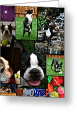 Boston Terrier Photo Collage Greeting Card