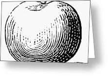 Botany: Apple Greeting Card