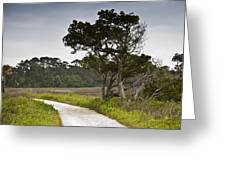 Botany Bay Pathway Tree Greeting Card