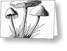 Botany: Mushroom Greeting Card