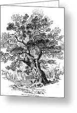 Botany: Oak Tree Greeting Card