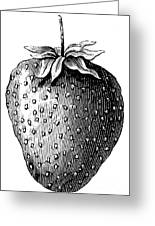 Botany: Strawberry Greeting Card