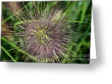 Bottle Brush By Nature Greeting Card