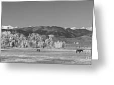 Boulder County Colorado Front Range Panorama With Horses Bw Greeting Card
