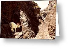 Boulder Fossile Expedition Greeting Card