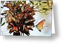 Bouquet Of Butterflies Greeting Card