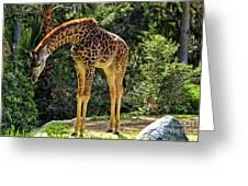 Bowing Giraffe Greeting Card by Mariola Bitner