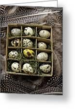 Box Of Quail Eggs Greeting Card by Garry Gay