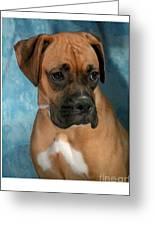 Boxer 624 Greeting Card