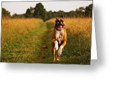 Boxer Dog Running Happily Through Field Greeting Card by Stephanie McDowell