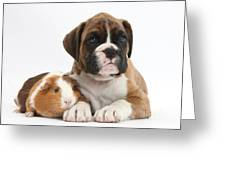 Boxer Puppy And Guinea Pig Greeting Card