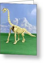 Brachiosaurus Dinosaur Skeleton Greeting Card
