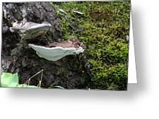 Bracket Fungus Greeting Card