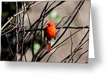Brambles Greeting Card