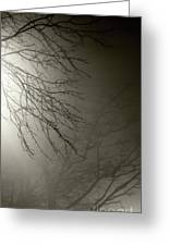Branches In The Fog Greeting Card by Susan Isakson