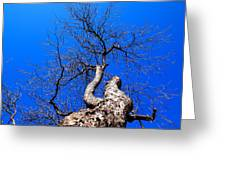 Branches In The Sky Greeting Card