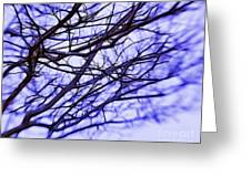 Branches In Winter Greeting Card by Judi Bagwell