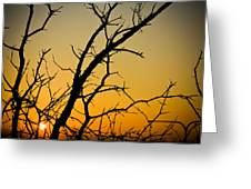 Branches Reaching The Sunset Greeting Card